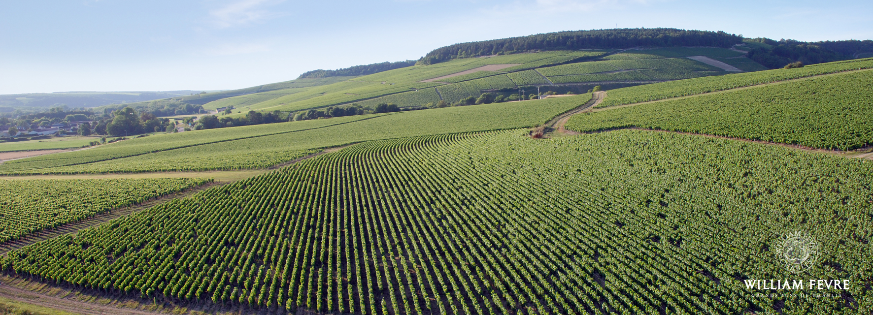 William Fèvre vineyard